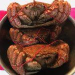 【オホーツク海からお宝が届いたよ】素敵な毛ガニに夕食は沈黙。「会話の暇なし」