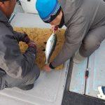 【タグ&リリース、今年も行っております‼️】魚種行動範囲把握の鍵はコレ。