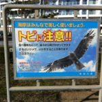 こんな看板。「トビに注意」鎌倉ビーチ周辺、たくさん掲げられてます。