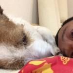 台風6号の影響で、道場の稽古も早上がり。愛犬と晩酌なり。
