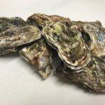【北海道 厚岸の牡蠣にニヤリ‼️】贅沢ミルクの味を満喫してます。