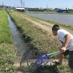 2018年【ガサガサ大作戦!】近所に流れる用水路に水が入った。次男と調査開始!