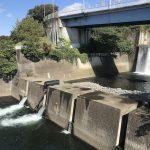 【相模川水系、ガサガサポイント次男とチェック】今日は久々に早起きして遊びに。