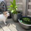 【楊貴妃メダカ、我が家にやって来た‼️】春の気候が楽しみです。